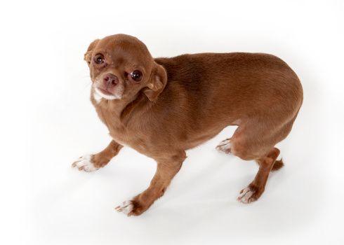 Demandez au formateur: aider un chien par une crainte grave de tempêtes