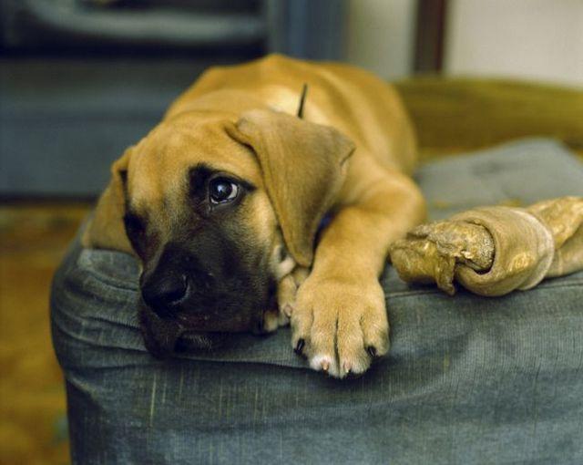 Demandez à l`entraîneur: aider un chien d`abri adapter à la vie avec une nouvelle famille