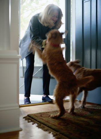 Demandez au formateur: comment puis-je enseigner à mon chien à ne pas sauter sur les gens?