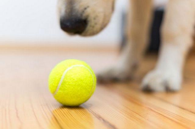Demandez au formateur: comment jouer chercher avec votre chien