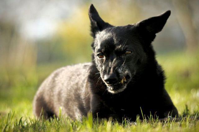 Demandez à l`entraîneur: mon chien devient agressif lorsque je tente de prendre quelque chose loin de lui