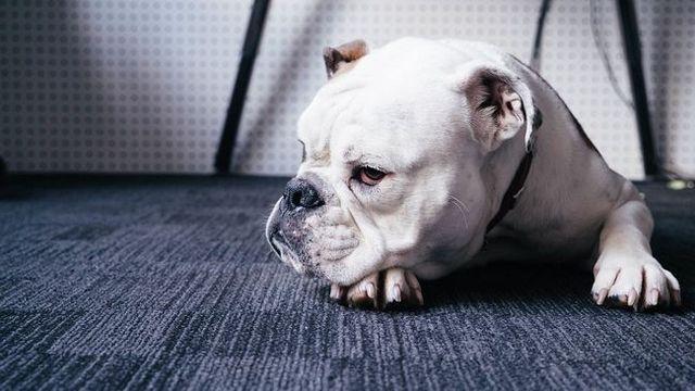 Demandez à l`entraîneur: mon chien tout simplement ne me écoute pas