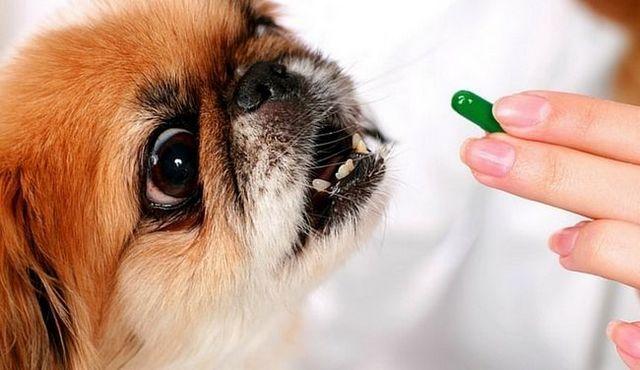 L`aspirine pour les chiens: est-il une bonne idée?