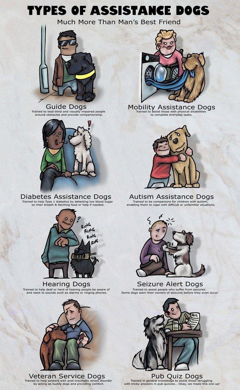 Les chiens d`assistance infographique