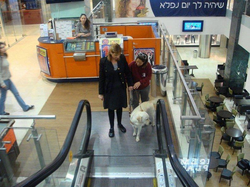 chien d`assistance va avec une femme escalator