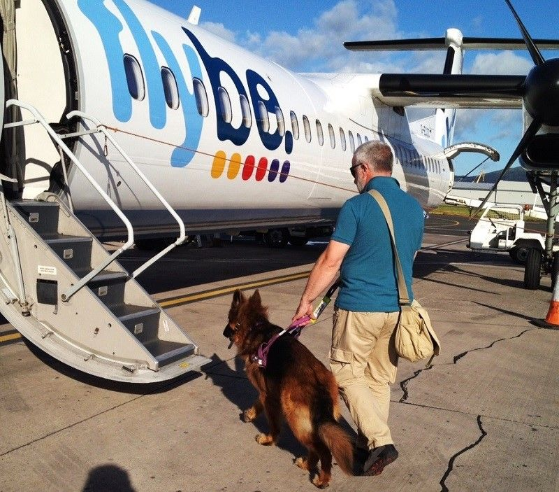 chien d`assistance d`entrer dans une cabine d`avion