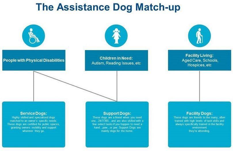 chien d`assistance match up