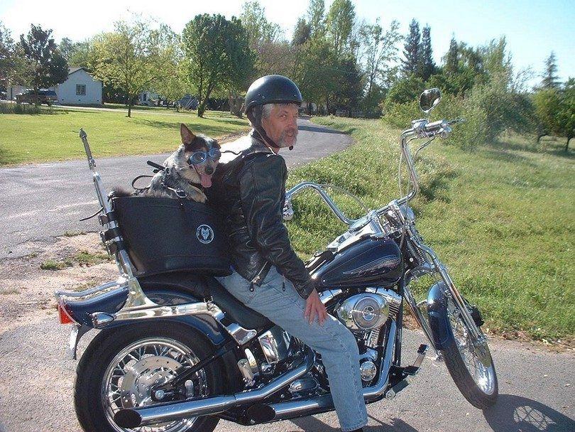 Moto porteur de chien