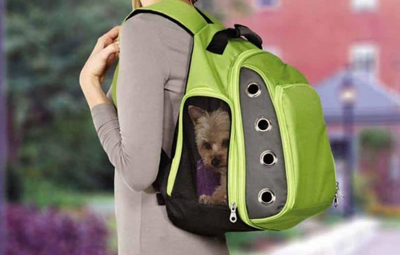 Casual Canine ultime support de sac à dos