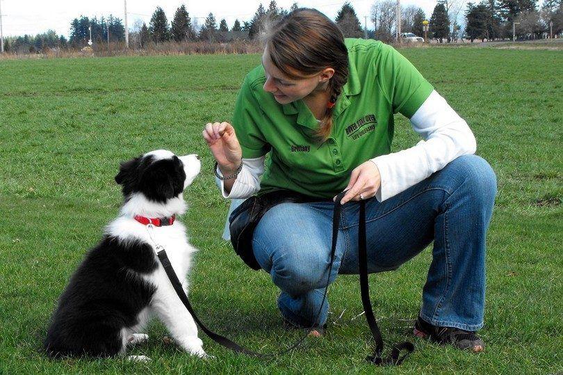 commandes de chien de base: camp d`entraînement canin