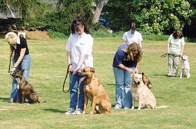 formation de chien de groupe