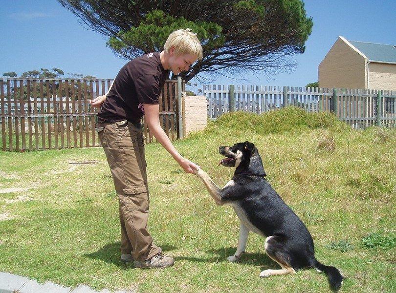 Obéissant chien