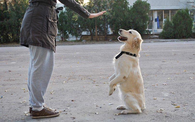 Entraineur de chien