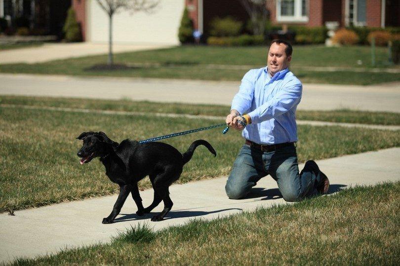 l`obéissance chien