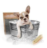 le bain d`un pupp