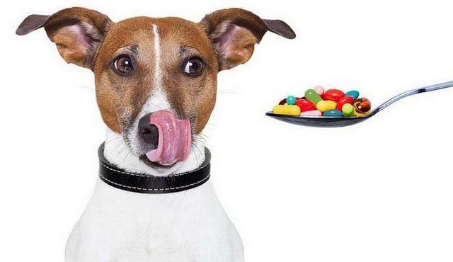 Benadryl pour les chiens: une bonne idée?