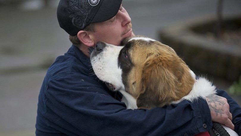 Les meilleurs chiens de compagnie: meilleures races adaptées pour les familles et les personnes âgées