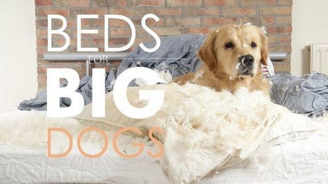 Les meilleurs lits de chien pour les grands chiens: Guide et recommandations