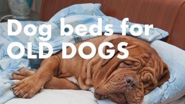 Les meilleurs lits de chien pour les chiens plus âgés: garder votre compagnon confortable