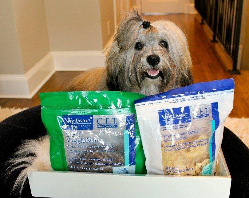 Les meilleurs os de chien: ce sont des friandises mieux pour votre chien?