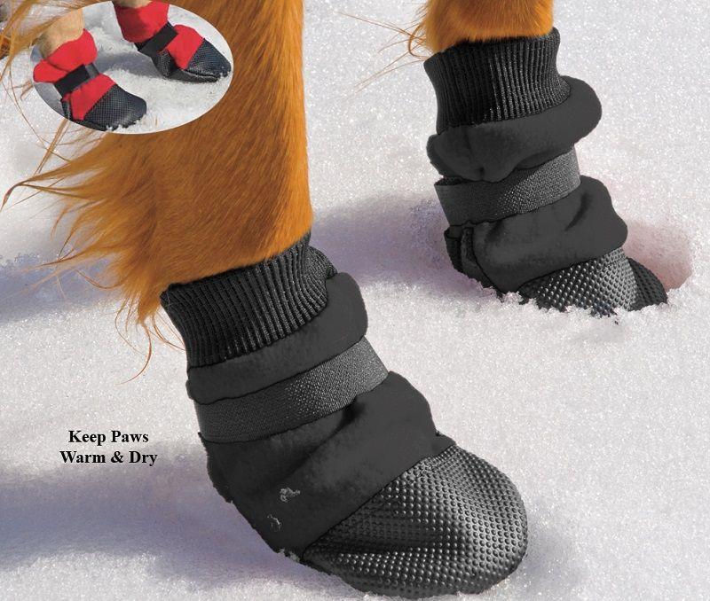 Pattes de chien avec des bottes
