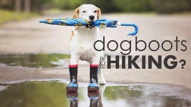 Meilleures bottes de chien pour la randonnée: éviter les coupes douloureuses sur votre prochain trek