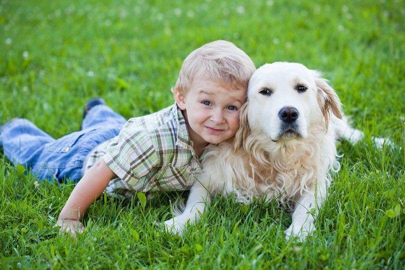 Meilleures races de chiens pour les enfants: ce qu`il faut considérer lors de la prise animal de compagnie pour votre enfant