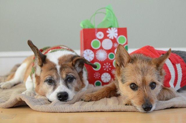 Les meilleurs cadeaux de Noël Chien et Idées Cadeaux
