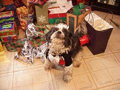 Les meilleurs cadeaux de Noël Dog et Idée de cadeau