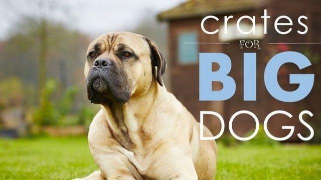 Meilleurs caisses de chien pour les grands chiens: 5 grands, ceux confortables