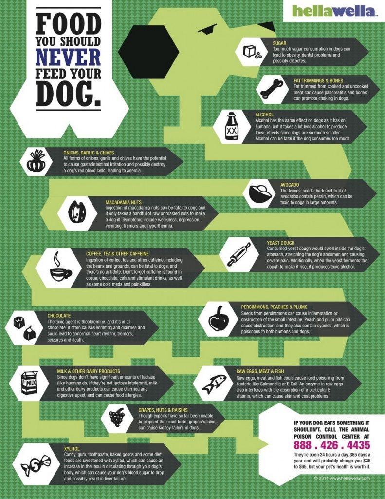 Foods jamais de nourrir votre chien