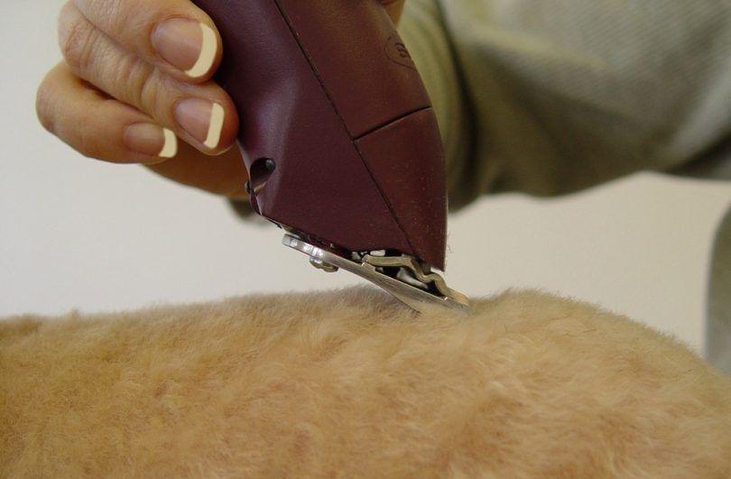 Meilleur clippers chien de toilettage: comment faire le toilettage une expérience amusante