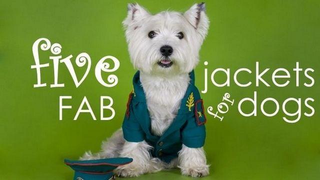 Meilleures vestes de chien: 5 (seconde) manteaux élégants et pratiques