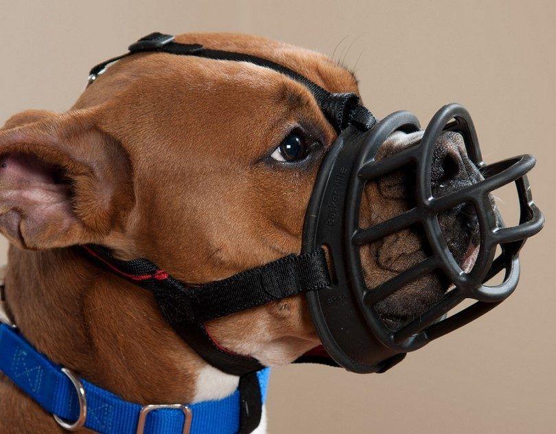 Meilleur museau de chien: comment choisir un produit pour les besoins de votre chien