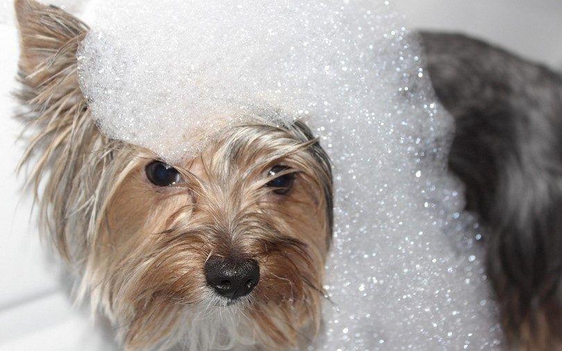Meilleur shampooing pour chien: garder votre animal propre et brillant