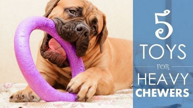 Les meilleurs jouets pour chiens pour mâcheurs lourds: 5 choix durables (et un peu de conseils ...)