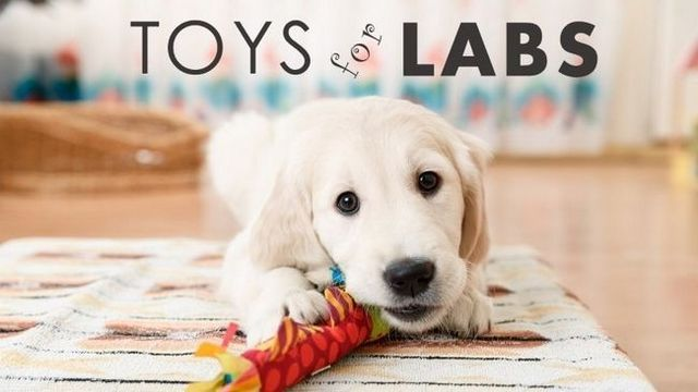 Les meilleurs jouets pour chiens pour les laboratoires: des jouets de qualité difficile pour les laboratoires forés