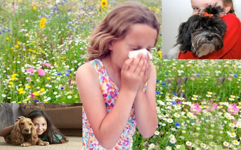 Les meilleurs chiens pour les enfants souffrant d`allergies: Quelle race choisir?