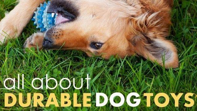 Les meilleurs jouets pour chiens durables: ces 4 sont à la hauteur