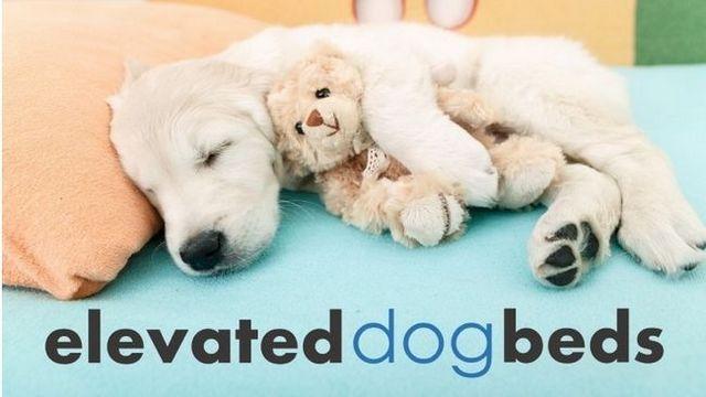 Les meilleurs lits pour chiens élevés: 5 grandes options + critiques