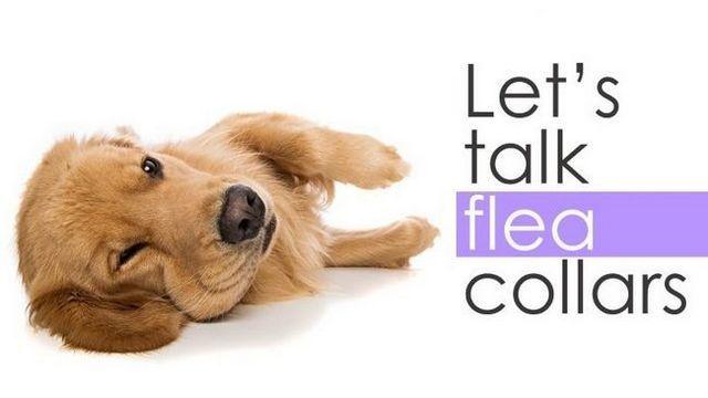Meilleur collier anti-puces pour les chiens: arrêter le grattage!