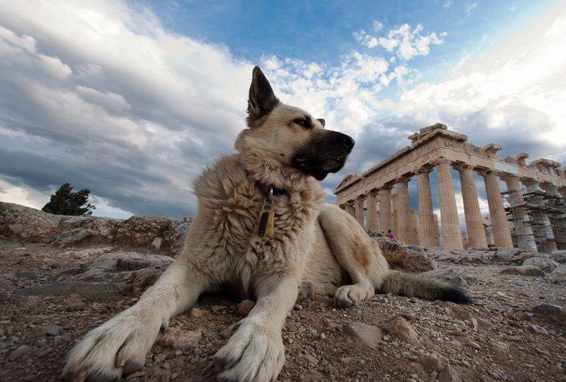 Les meilleurs chiens de garde pour les familles: des conseils sur la façon d`assurer votre sécurité
