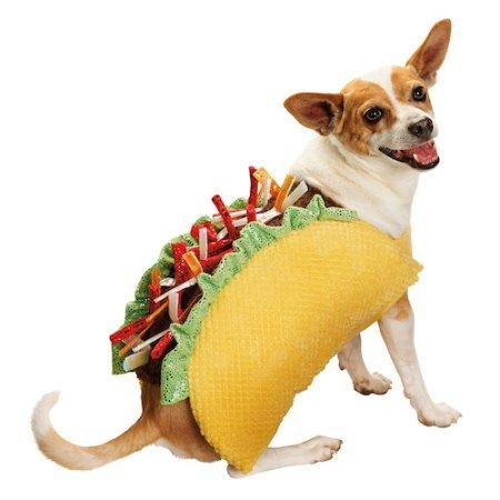 Les meilleurs costumes d`Halloween pour chiens