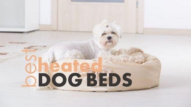 Les meilleurs lits pour chiens chauffés: 4 lits chauds et câlin pour votre chiot