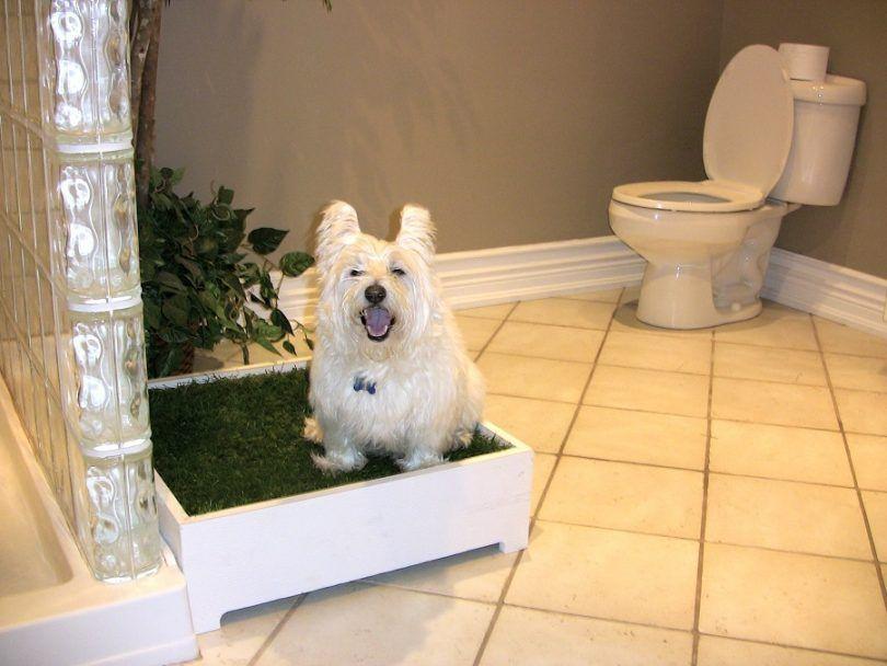 Meilleur chien pot intérieur: un examen des meilleurs designs de pot de chien d`intérieur