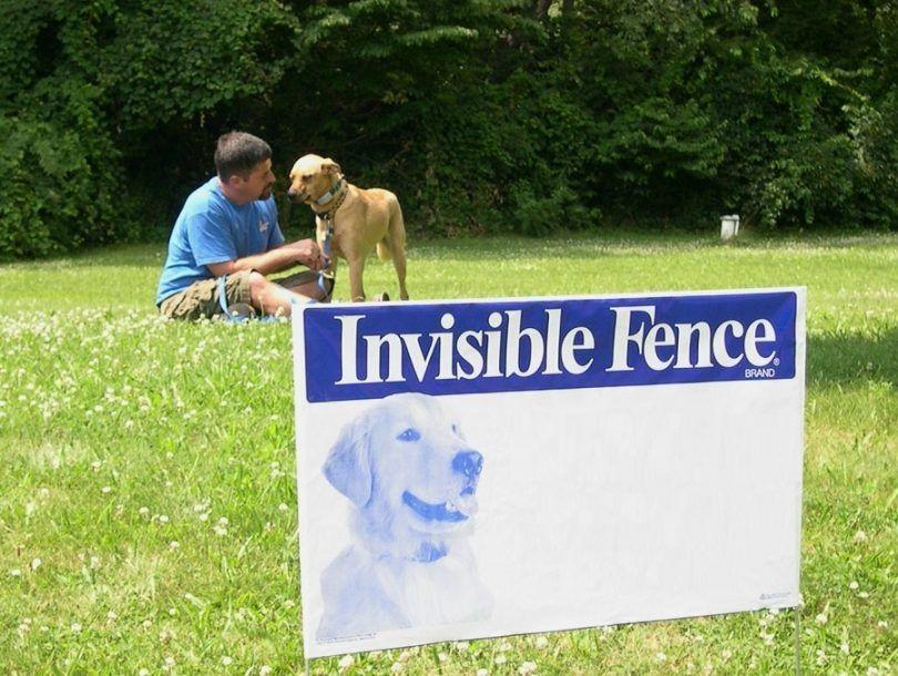 clôtures chien invisible