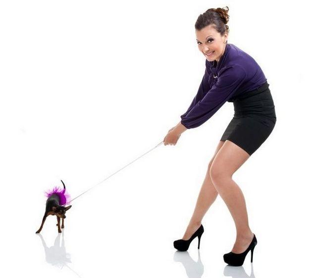 meilleur sans harnais de traction pour chien