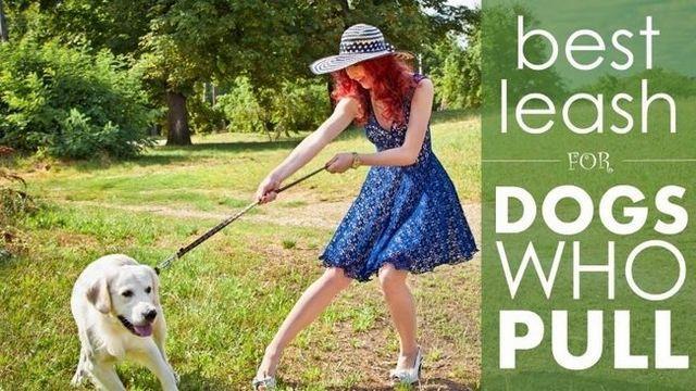 Meilleur laisse pour les chiens qui tirent: 5 grandes options pour régner chez un chien trop impatients