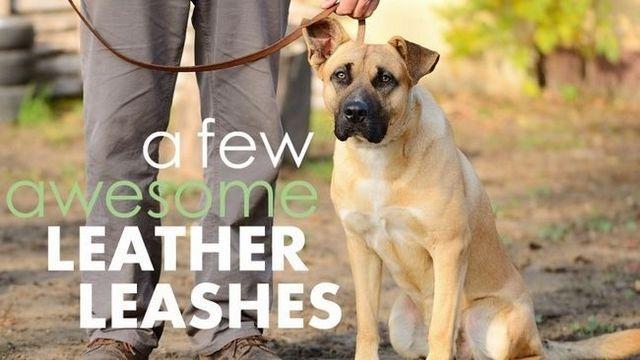 Meilleur laisses de chien en cuir: 5 choix de luxe et robustes