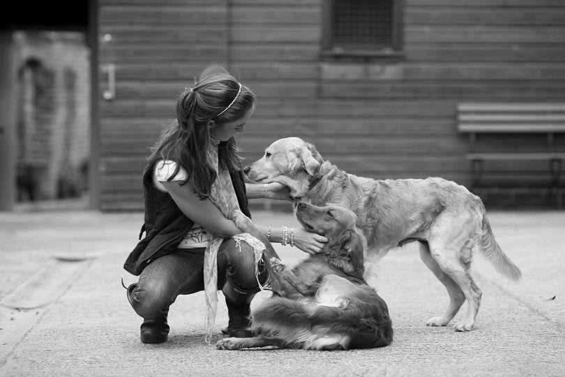 Les meilleurs chiens de taille moyenne: le plus populaire et aimé 5 races dans le monde